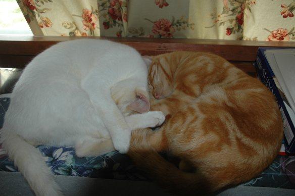 Oliver & Frankie